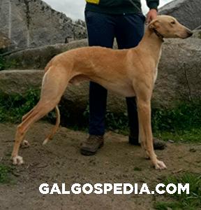 Sorti Galgospedia